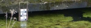 grundwasser_wasserwerk_jungfernheide